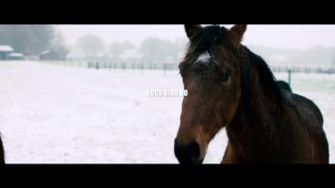 William Araujo – Loco Riba Bo Trailer #1